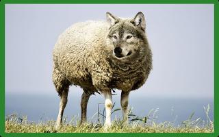Выгодно ли разведение овец?